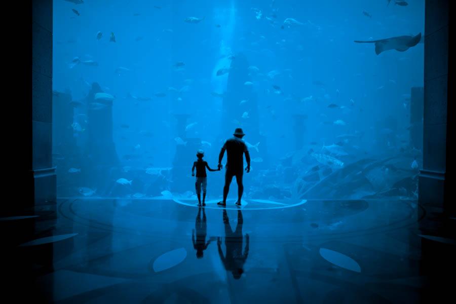 12 Aquaria