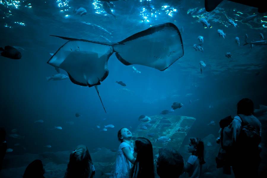 03 Aquaria