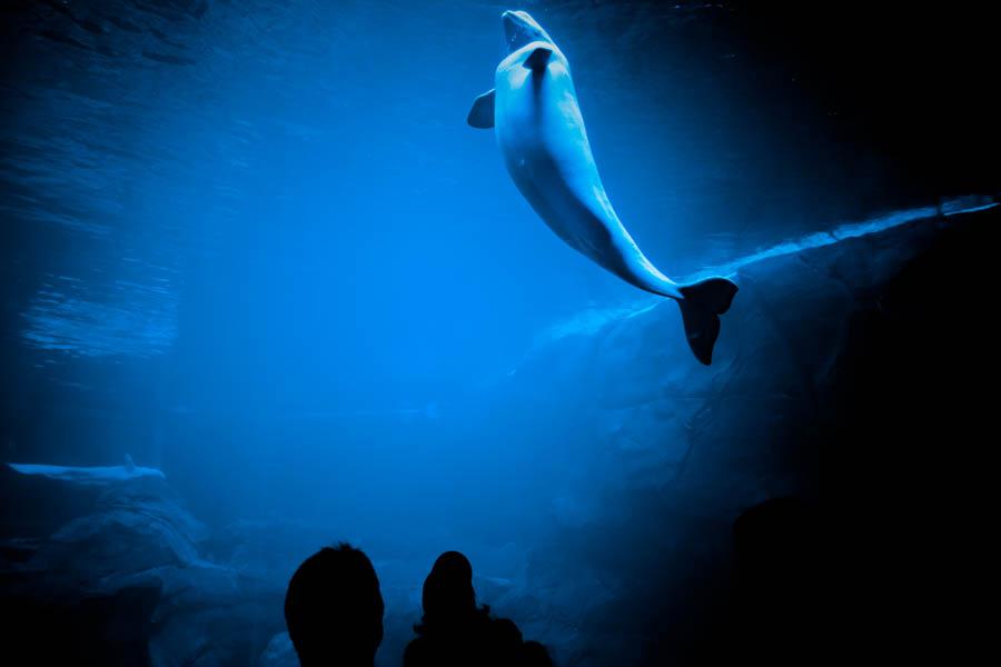 10 Aquaria