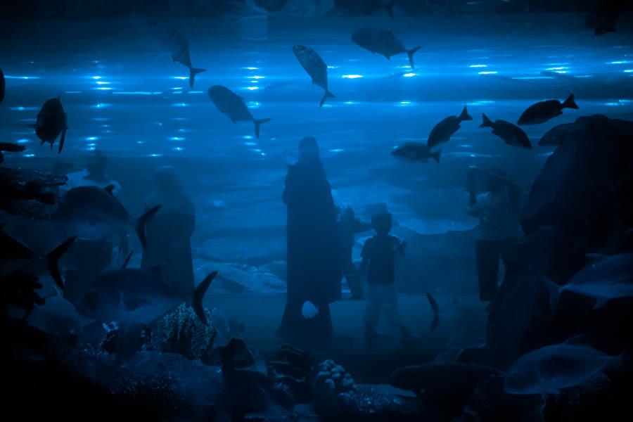 11 Aquaria
