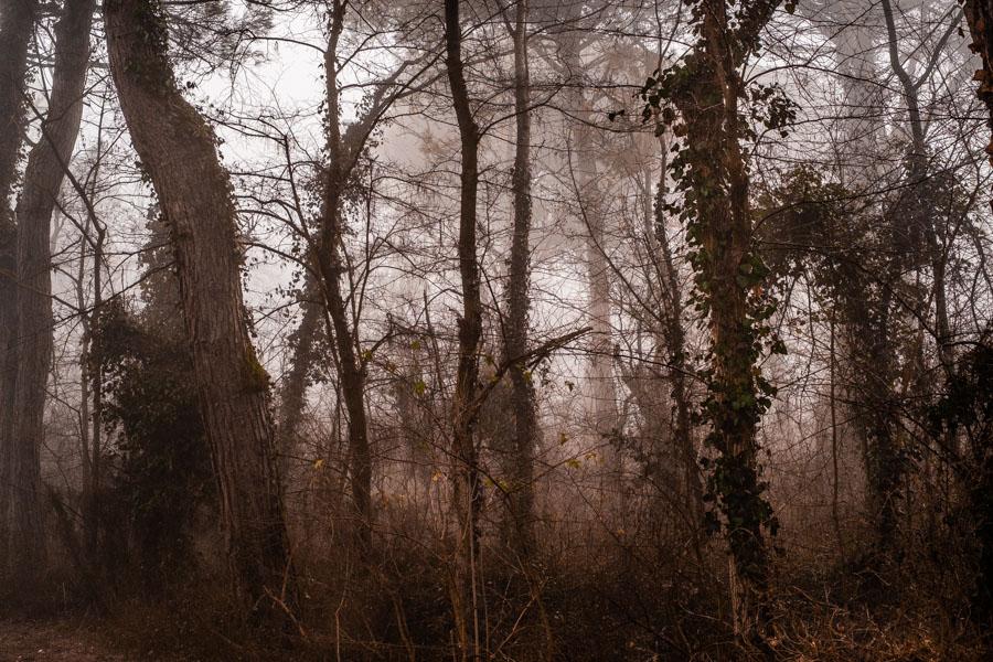02 La Divina Foresta Spessa e Viva