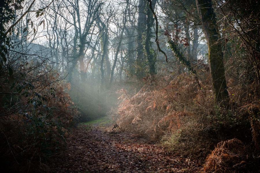 03 La Divina Foresta Spessa e Viva