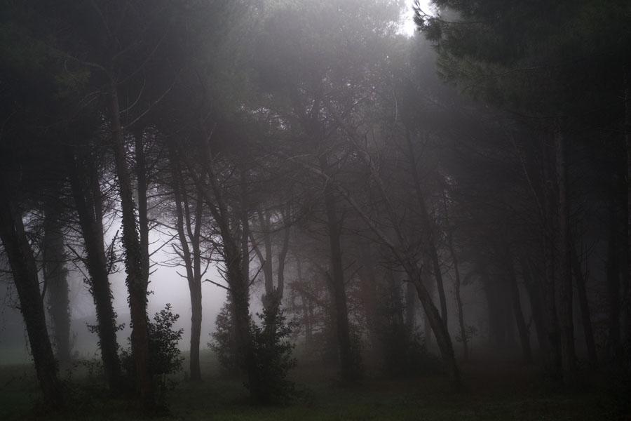 05 La Divina Foresta Spessa e Viva