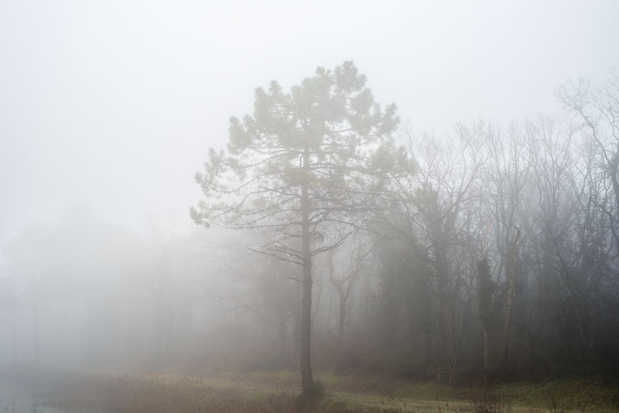 06 La Divina Foresta Spessa e Viva