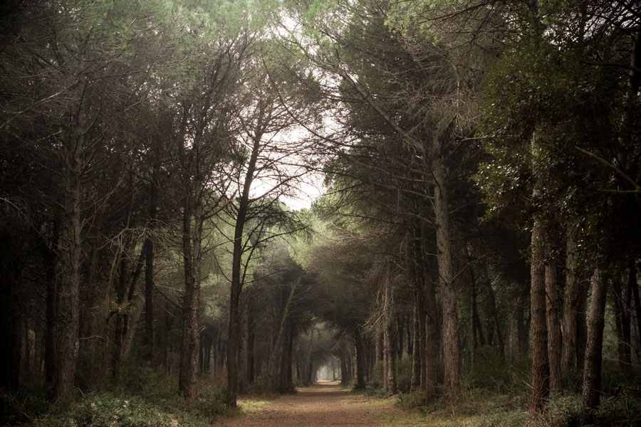 07 La Divina Foresta Spessa e Viva