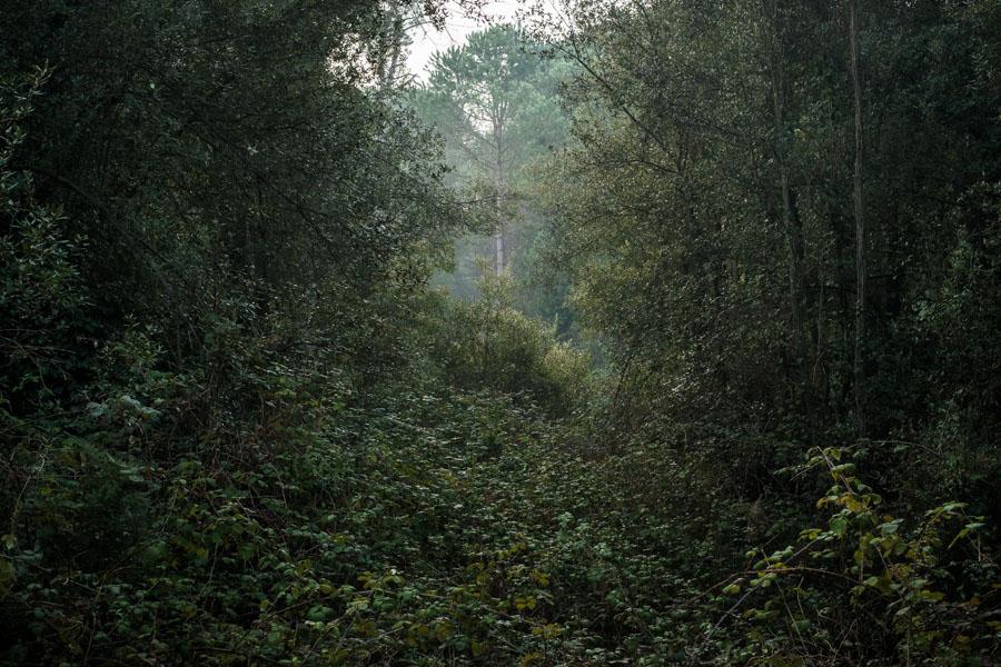 08 La Divina Foresta Spessa e Viva