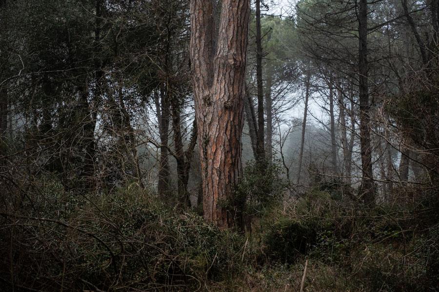 10 La Divina Foresta Spessa e Viva