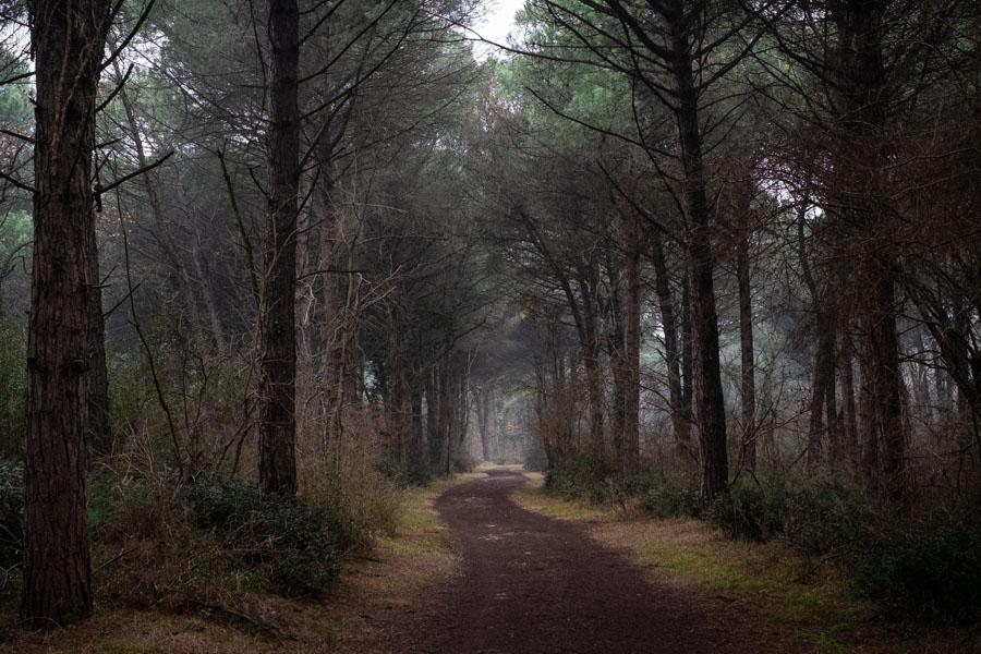 11 La Divina Foresta Spessa e Viva