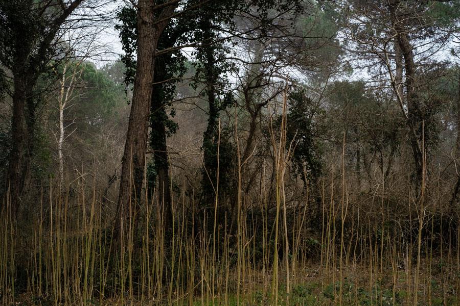 12 La Divina Foresta Spessa e Viva