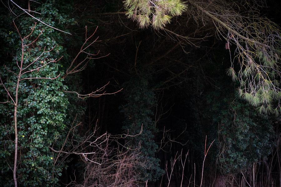 13 La Divina Foresta Spessa e Viva