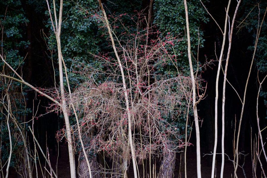 14 La Divina Foresta Spessa e Viva