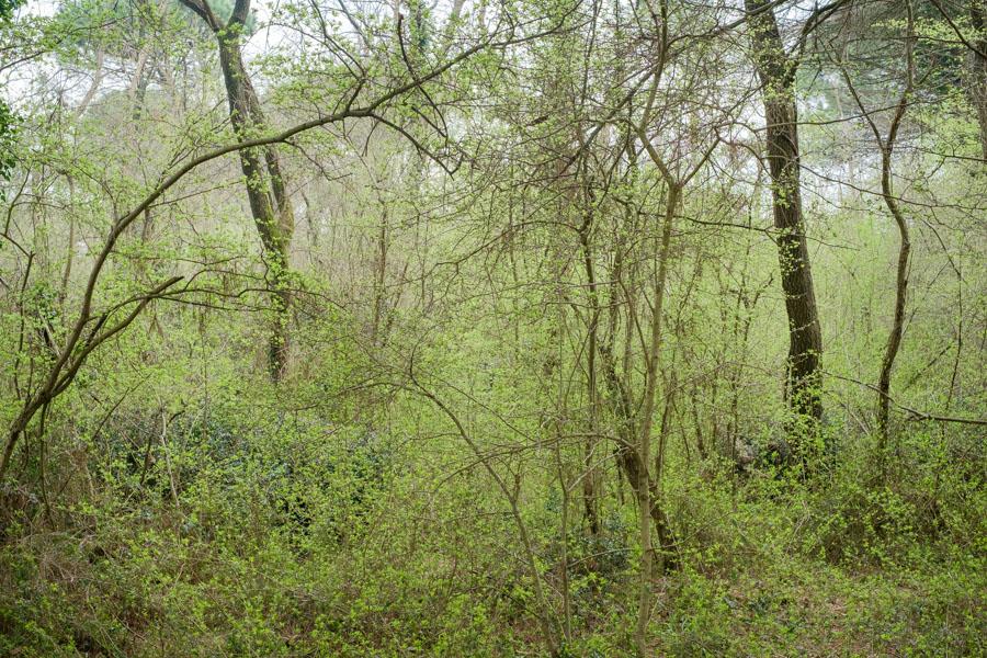 15 La Divina Foresta Spessa e Viva
