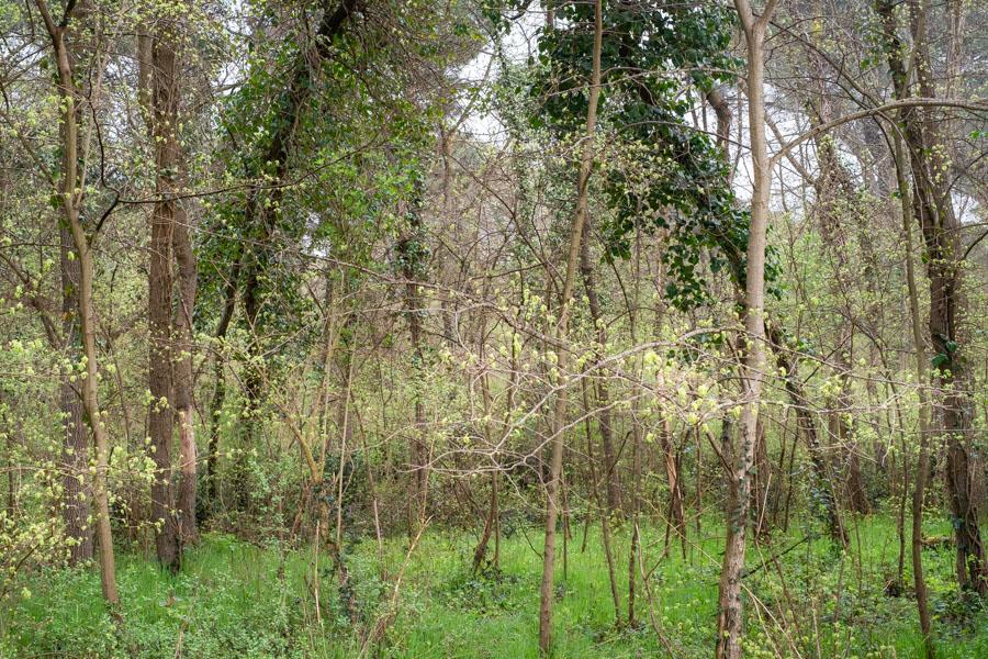 16 La Divina Foresta Spessa e Viva