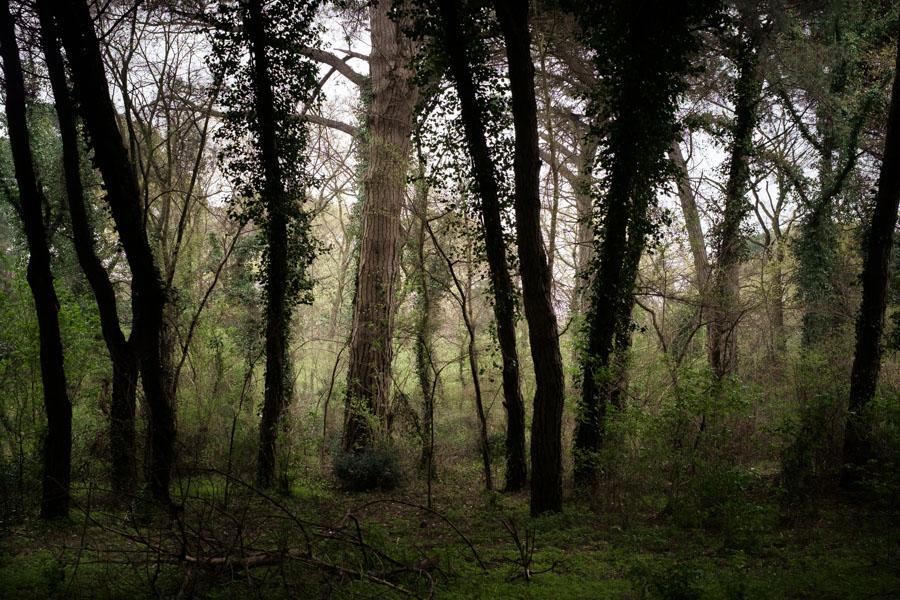 17 La Divina Foresta Spessa e Viva
