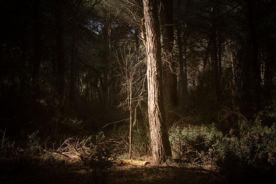18 La Divina Foresta Spessa e Viva