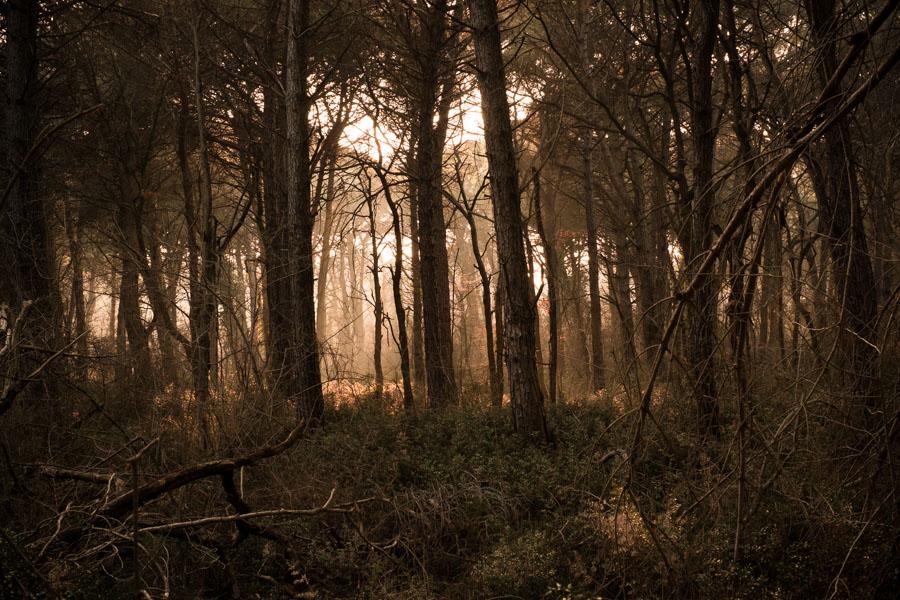 19 La Divina Foresta Spessa e Viva
