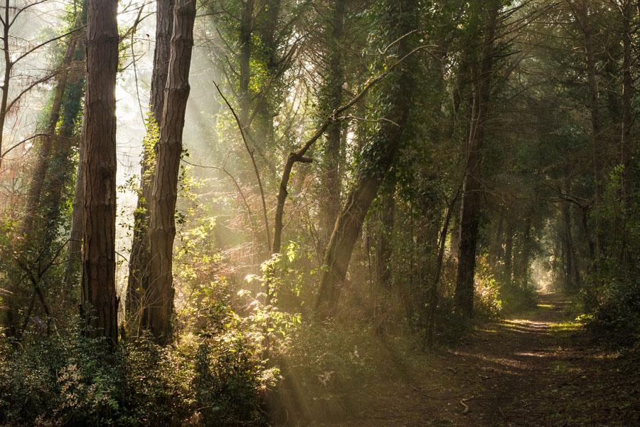 20 La Divina Foresta Spessa e Viva