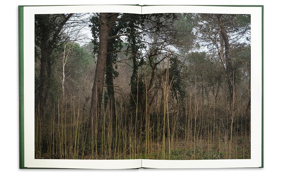 0104-La-Divina-Foresta-Spessa-e-Viva-APR-2021-pp24-25